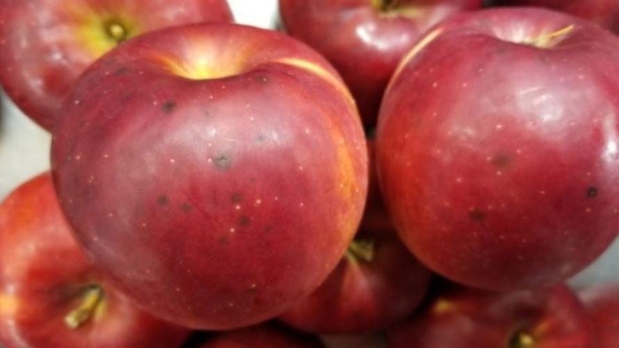 りんごの皮の黒い斑点、原因や正体は何?/食べて大丈夫?