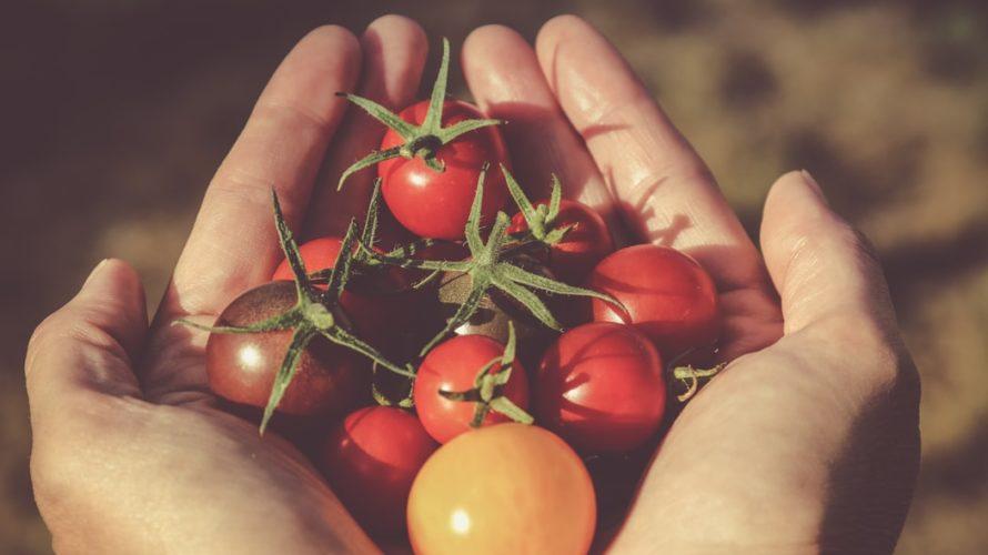 露地栽培とハウス栽培(温室栽培)の違いは?