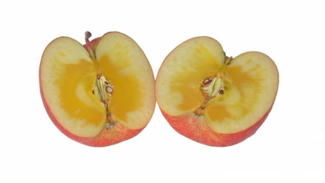 りんごの蜜の正体は何? なぜ入る? 甘い? 消えることはある? 保存方法は?