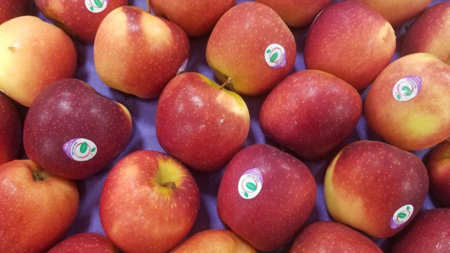 【NZ Queen(Scired)】パシフィッククイーンりんごの特徴