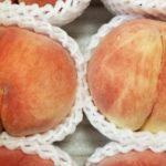 幸茜(さちあかね)ってどんな品種の桃?/特徴と食べてみた感想