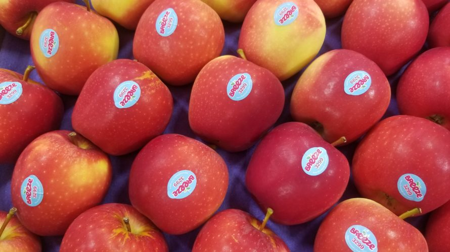 【NZ産ブリーズ(breeze)りんご】特徴と実食レビュー/糖度も計測