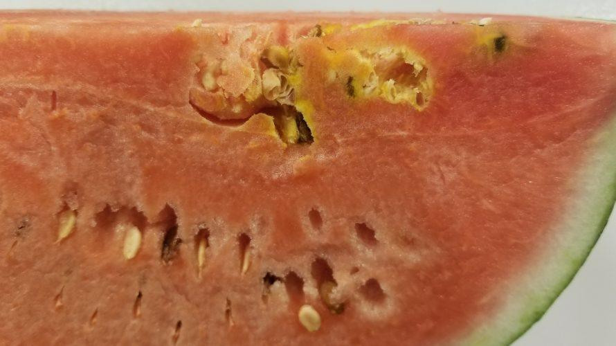 【スイカの種の周りが空洞】果肉が空洞で黄色く変色している原因は?