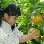 美味しい梨の品種/実際に売れている人気の梨ランキングBEST5