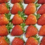 サマーアミーゴ/夏いちごの特徴【味の感想、糖度&果肉断面写真あり】