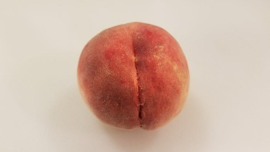 さくら白桃の特徴 / どんな味? 果肉の硬さは? 日持ちはする? 贈り物にどう?