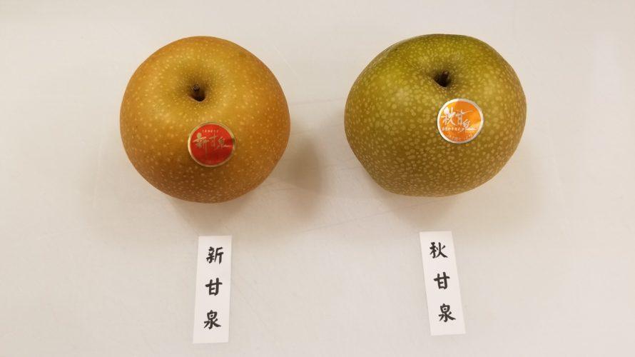 新甘泉と秋甘泉の違い/鳥取県産のおいしい新品種梨の特徴を比較