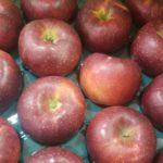 秋映りんごの特徴/味や食感は?時期は?掛け合わせは?