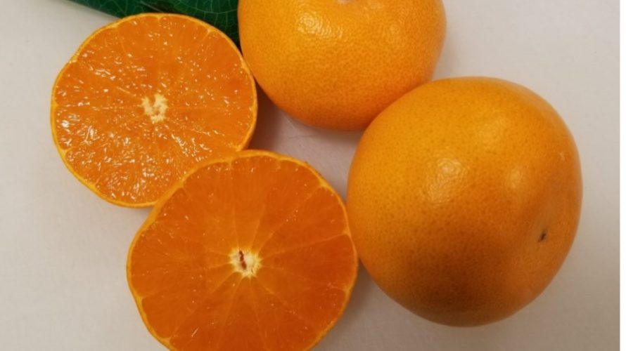 【保存版】美味しくて人気の柑橘類ランキング/ギフトにおすすめ5選