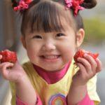 子供に人気のいちご、迷ったらこの品種一択!甘くて美味しいと大好評!