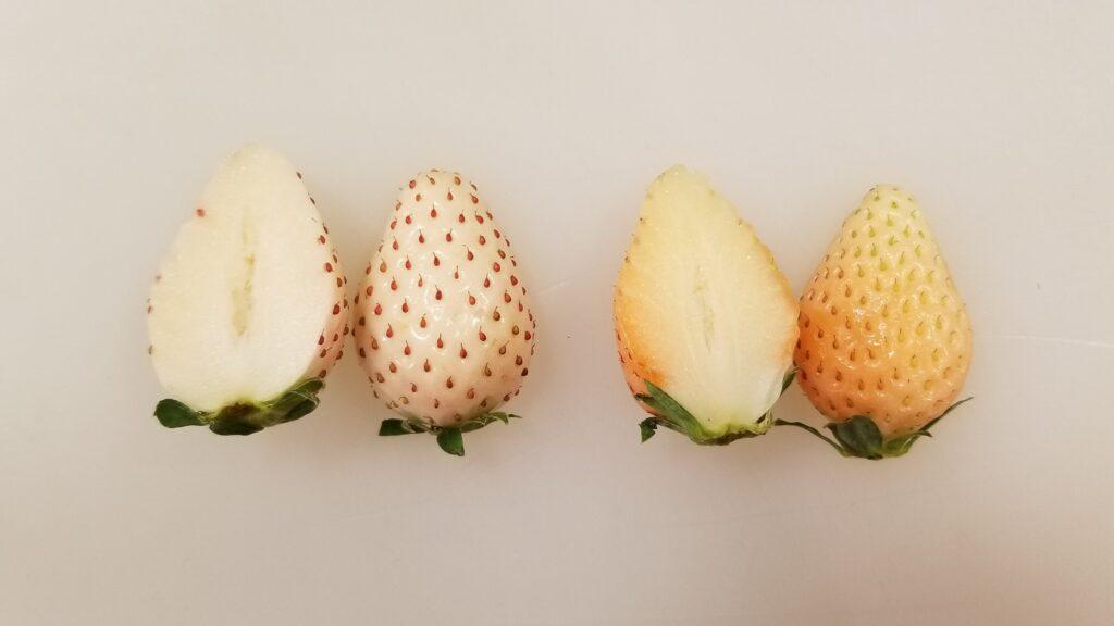 淡雪とパールホワイトの果肉比較写真
