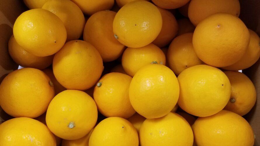 【徹底解説】メイヤーレモンは普通のレモンとはちがう? どんな味? 使い方は?