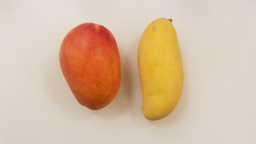 【果肉写真あり】台湾マンゴーとタイマンゴー(マハチャノ)の違いは?美味しくて人気があるのはどっち?