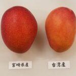 宮崎マンゴーと台湾マンゴーの違いは? 味はどっちが甘くて美味しい?