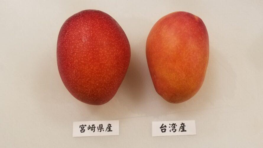 宮崎マンゴー 台湾マンゴー 見た目比較