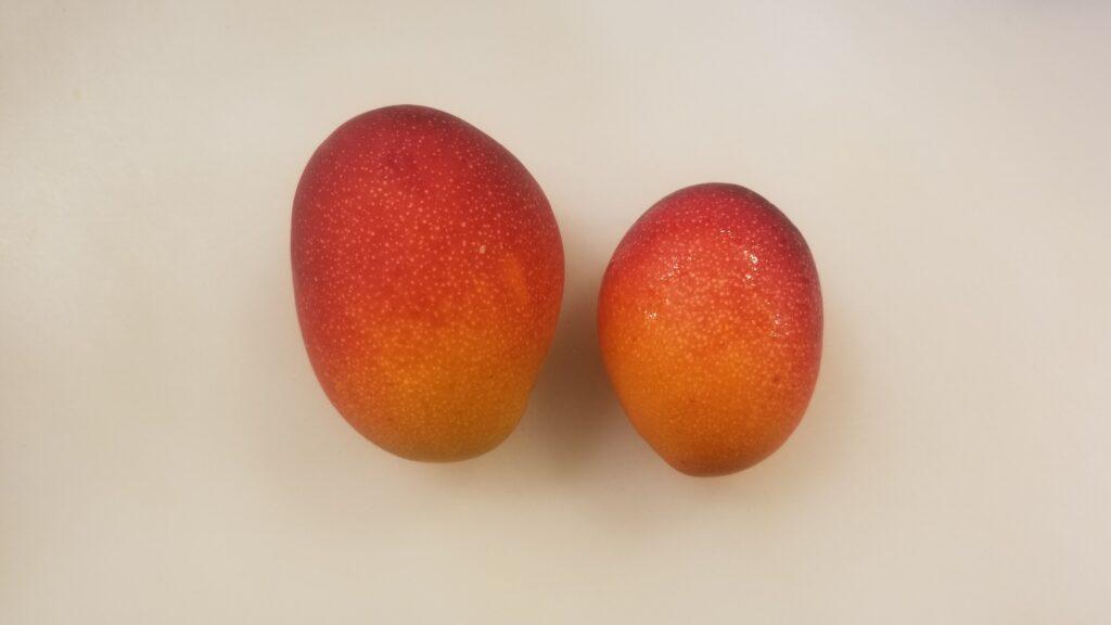ミニマンゴー大きさ比較